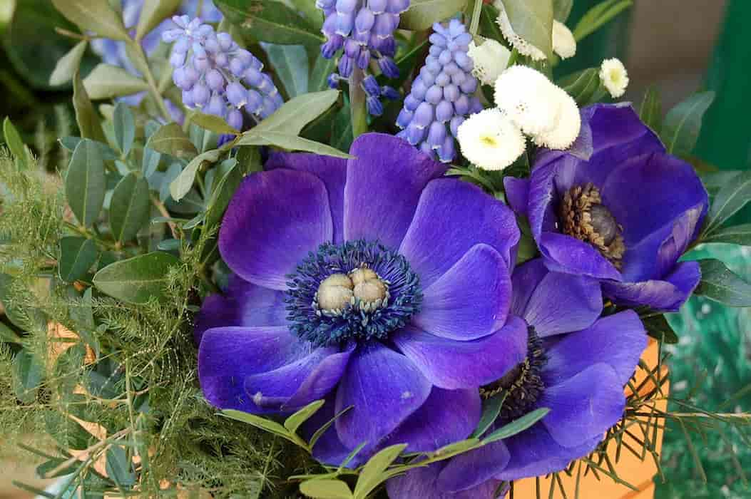 Festa dei fiori Bolzano